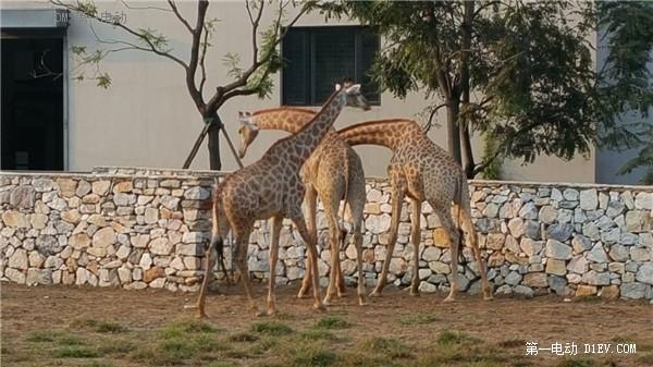 当天往返 开比亚迪E6大兴野生动物园亲子游