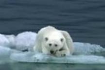 日产LEAF电动汽车创意广告-Polar Bear