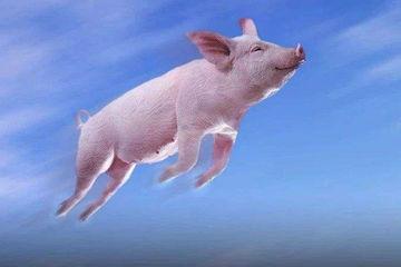 充电桩市场大洗牌:风还没停,猪却在不断往下掉