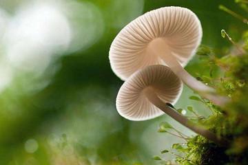 蘑菇,怎么能让你的车更聪明?