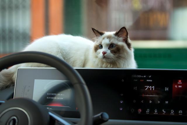 """不管黑猫白猫,能让大家喜爱的就是""""好猫"""""""
