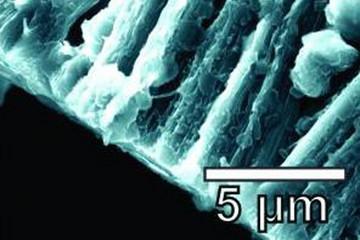 石墨烯+碳纳米管,莱斯大学研发新阳极攻克树突难题