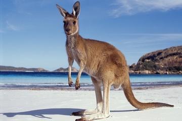 """澳大利亚建成""""超级高速公路"""":1000多英里,标配快速充电站"""