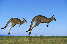 通用本周五关闭最后一条生产线 澳大利亚再无汽车制造业