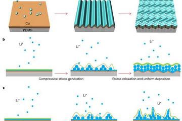 美国两大学利用PDMS层 减少锂金属电池锂晶枝的生成