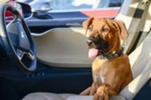 特斯拉将推出宠物狗模式 用心呵护汪星人的心情