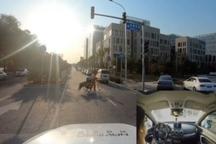 四维图新获批北京市自动驾驶路测T3牌照